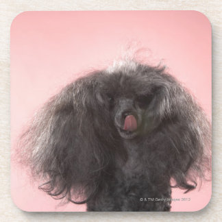 Dog with hair in front of face and tongue out drink coasters