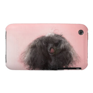 Dog with hair in front of face and tongue out iPhone 3 cases