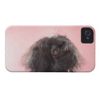 Dog with hair in front of face and tongue out iPhone 4 Case-Mate case