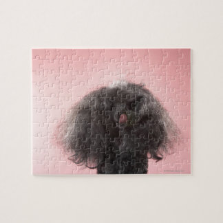 Dog with hair in front of face and tongue out jigsaw puzzle