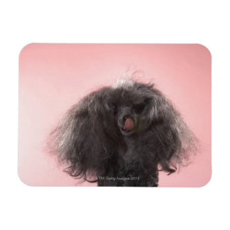 Dog with hair in front of face and tongue out rectangular photo magnet
