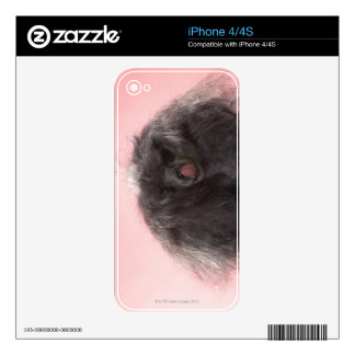 Dog with hair in front of face and tongue out decal for the iPhone 4