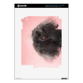 Dog with hair in front of face and tongue out iPad 3 skins