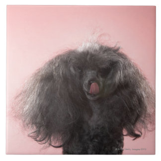 Dog with hair in front of face and tongue out large square tile