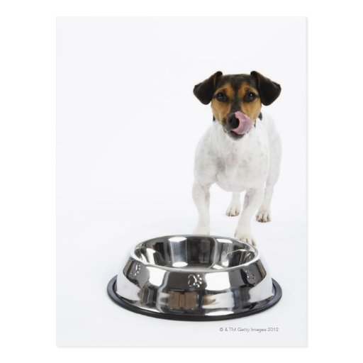 Dog with Large Bowl Postcard
