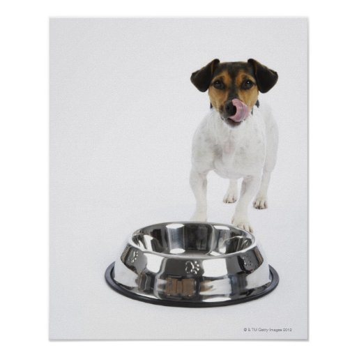 Dog with Large Bowl Poster