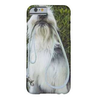 Dog with leash in mouth barely there iPhone 6 case