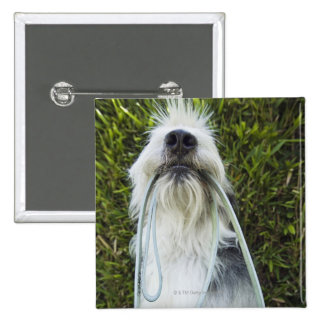 Dog with leash in mouth button