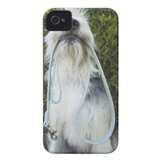 Dog with leash in mouth iPhone 4 case