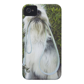 Dog with leash in mouth iPhone 4 cover