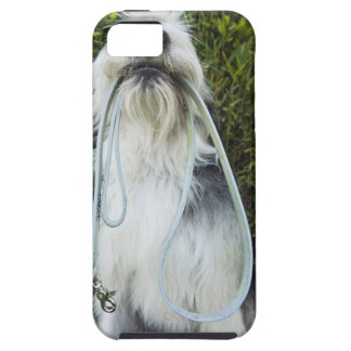 Dog with leash in mouth iPhone SE/5/5s case