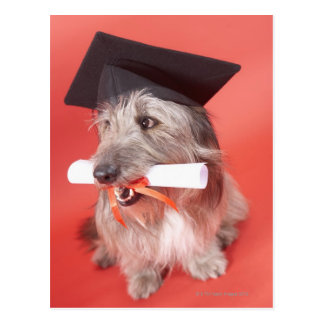 Dog with mortarboard and diploma postcard