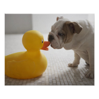 Dog with plastic duck poster