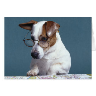 Dog with reading glasses studying map card