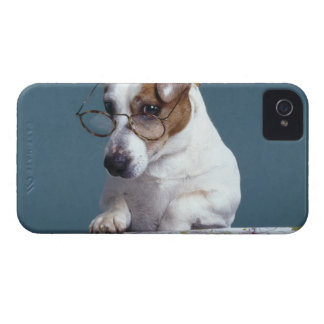 Dog with reading glasses studying map iPhone 4 case