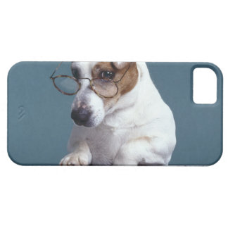 Dog with reading glasses studying map iPhone 5 covers