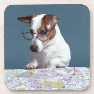 Dog with reading glasses studying map drink coaster