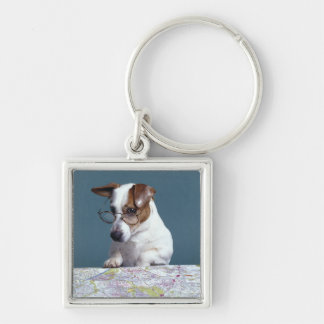Dog with reading glasses studying map keychains