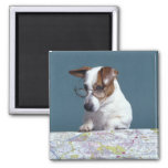Dog with reading glasses studying map magnet