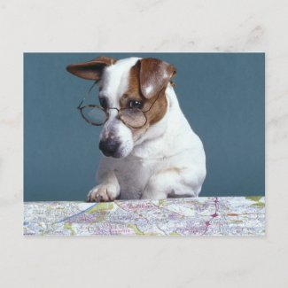 Dog with reading glasses studying map post cards