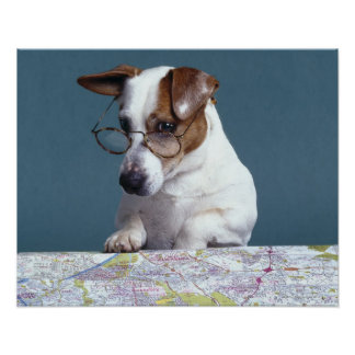 Dog with reading glasses studying map print