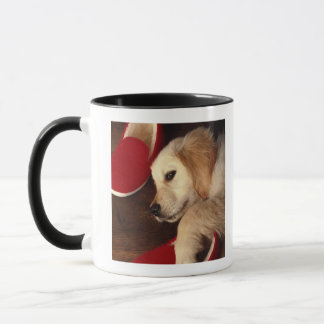Dog with shoes lying on wooden floor, elevated mug