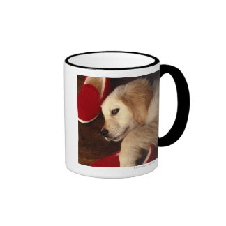 Dog with shoes lying on wooden floor, elevated mugs