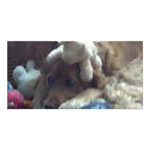 dog with teddys photo card