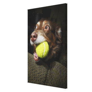 Dog with Tennis Ball Canvas Print