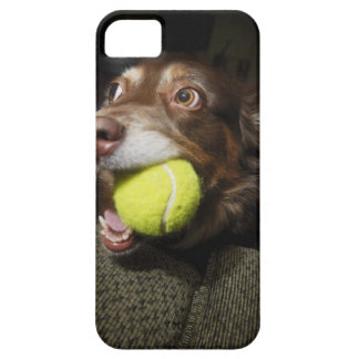 Dog with Tennis Ball iPhone SE/5/5s Case