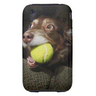 Dog with Tennis Ball Tough iPhone 3 Case