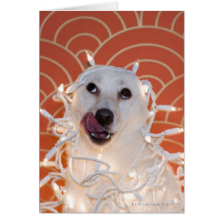 Dog Wrapped in Christmas Lights 2 Card