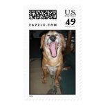 Dog Yawn Postage Stamps