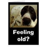 Dog years greeting card