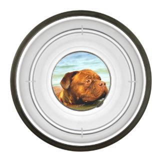 Dog Pet Bowl