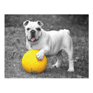 Dogball -Um, I Mean Dodgeball Anyone Postcard