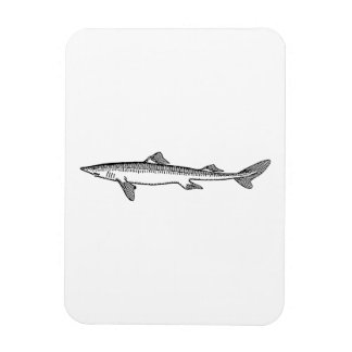 Dogfish Flexible Magnets