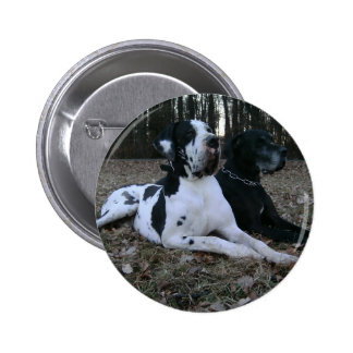 Dogge alemán Great Dane Perros Dogue Allemand Pin