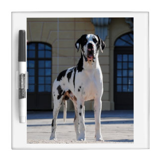 Dogge alemán, Great Dane, Perros, Dogue Allemand Pizarra