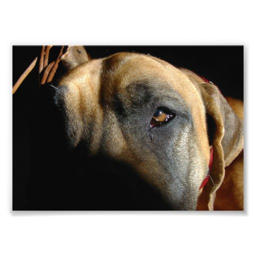 Doggenauge Foto