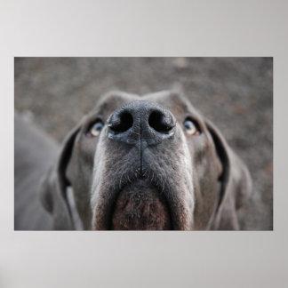 """Doggenposter """"nariz """" póster"""