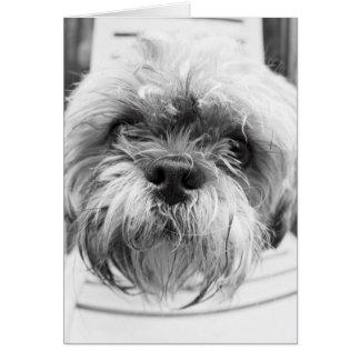 Doggie Card