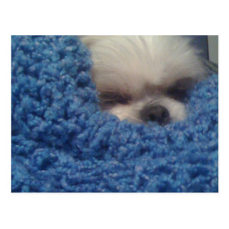 Doggie in Blanket Postcard