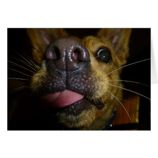 Doggie Kisses Note Cards