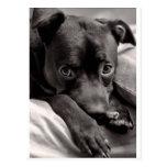 Doggie Post Card