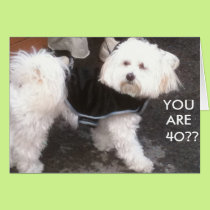 DOGGONE, YOU ARE 40?? CARD