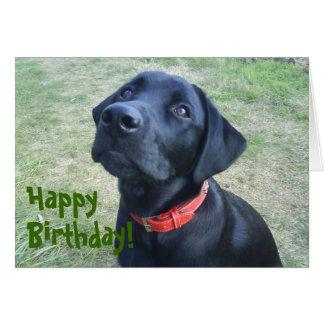 Doggy Birthday Card!