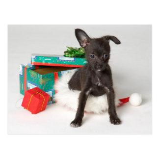 Doggy Christmas present Postcard