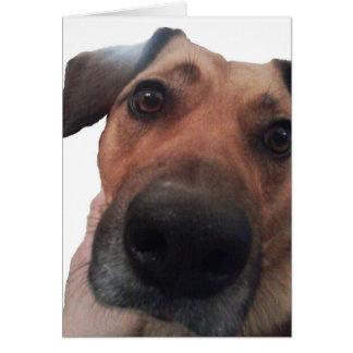 Doggy Hello Greeting Card