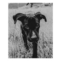 Doggy in the Field // Black and White Filter